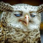 Как быстро заснуть за минуту без таблеток, если не хочется спать